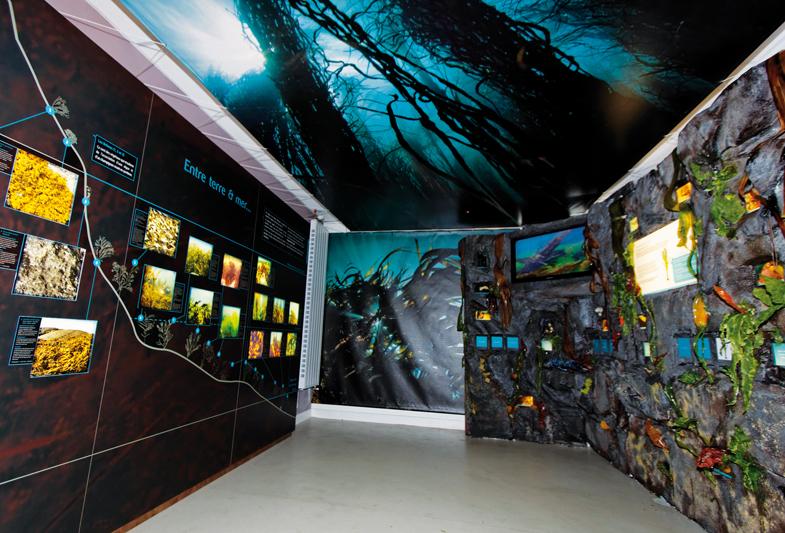 """Résultat de recherche d'images pour """"maison de l'algue lanildut"""""""